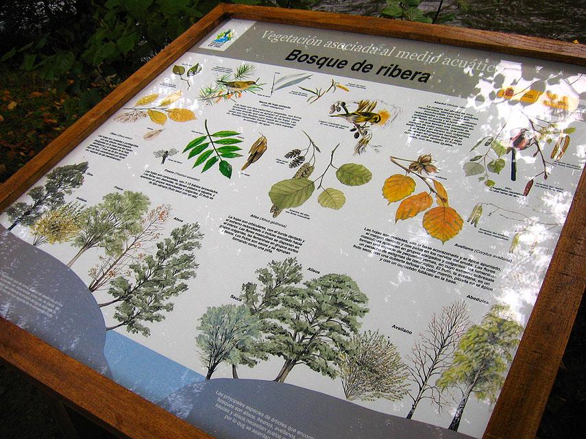 Instalación de 4 paneles didácticos sobre la flora y fauna del río en el paseo del vino, de Cangas del Narcea.